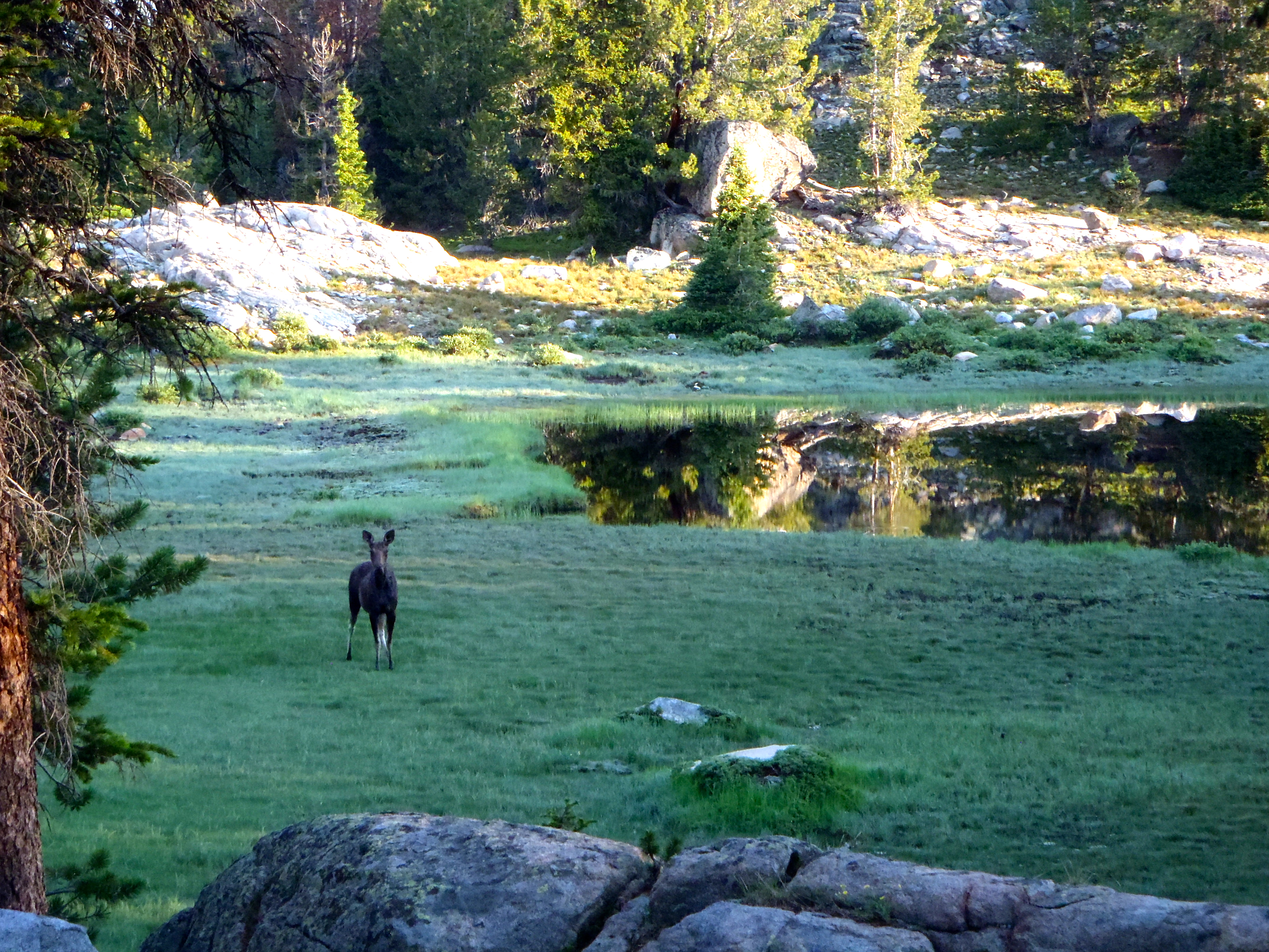 We saw this moose right after the sun came up.