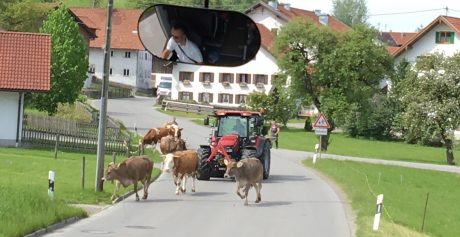Ha! A Bavarian traffic jam. Our Wyoming traffic jams often have cows in them, too.