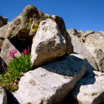 Wildflowers and lichen-covered rocks were in abundance during our ascent of Wind River Peak.