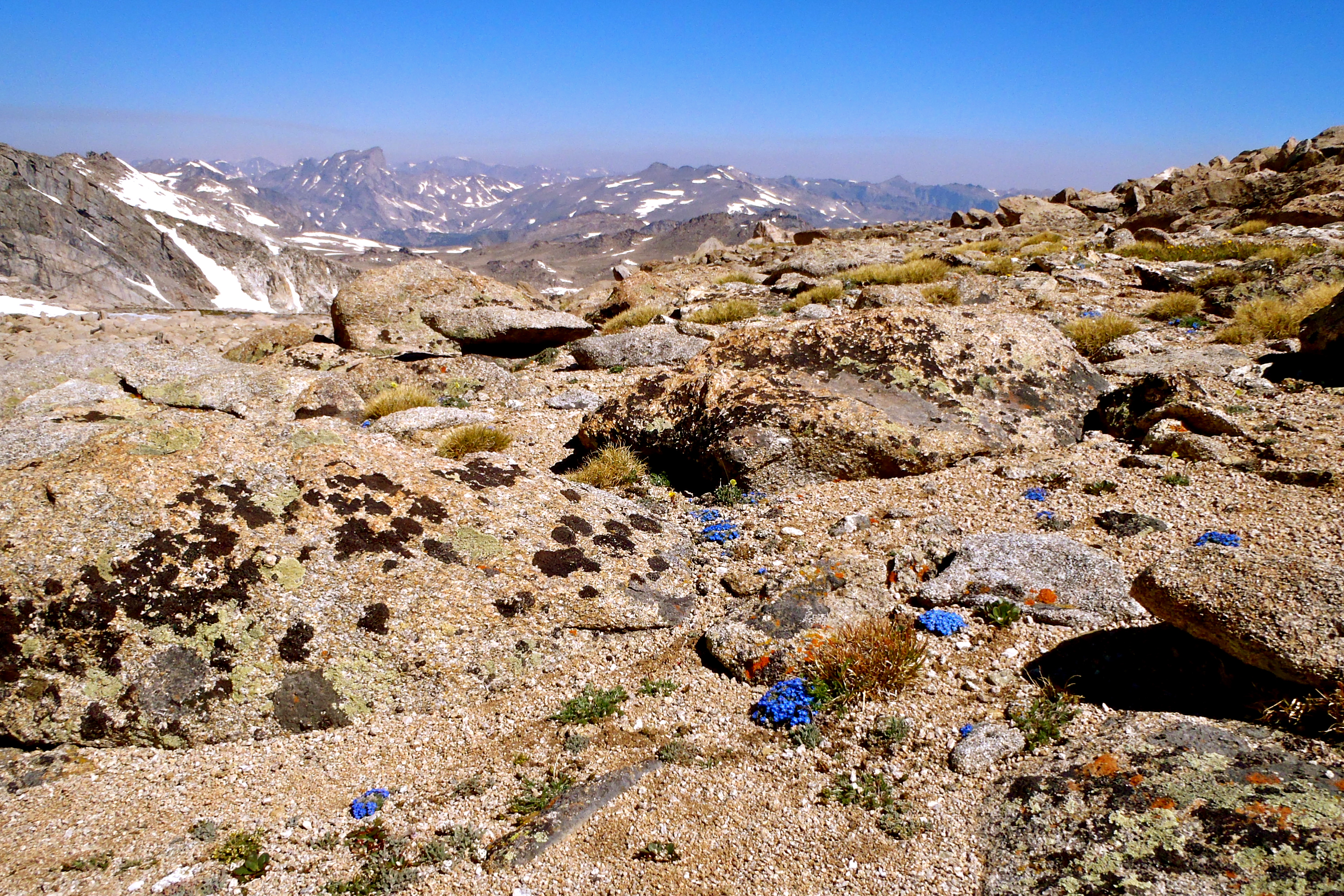 Alpine tundra. Notice the little blue flowers. They are forget-me-nots, my favorite.