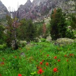 Indian paintbrush and big granite walls.