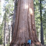 Standing in front of Giant Grizzly Sequoia in Yosemite's Mariposa Grove.
