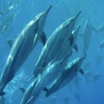 Dolphins surrounded us on our ocean swims. (Photo by SunlightonWater.com)