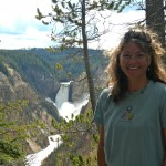 Bears, wolves, elk and more in Yellowstone.