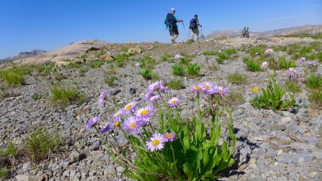 More flowers. Alaska Basin.