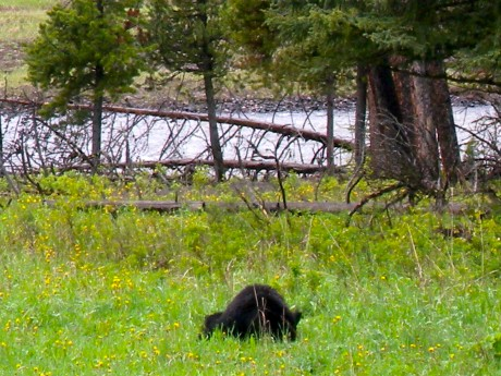 A black bear we watched.