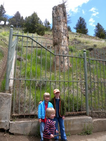 Our boys in front of Petrified Tree, a 50-million-year-old monument in Yellowstone.